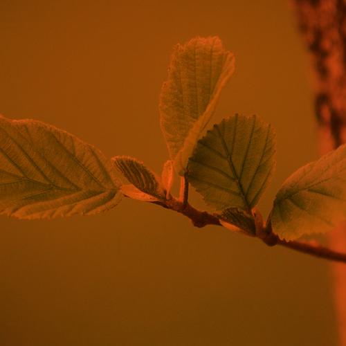 trees-2987303_1280 copia