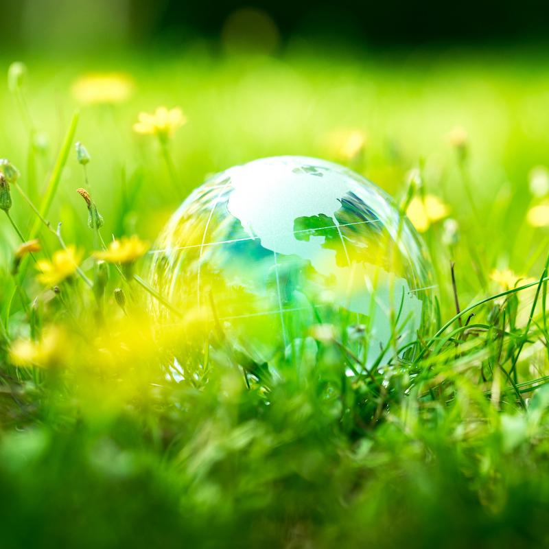 Notizie e approfondimenti sull'ambiente dall'Italia e dal mondo